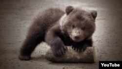 El niño oso