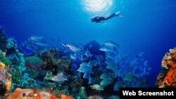 Arrecifes de coral en Playa Santa Lucía, Camagüey, Cuba.