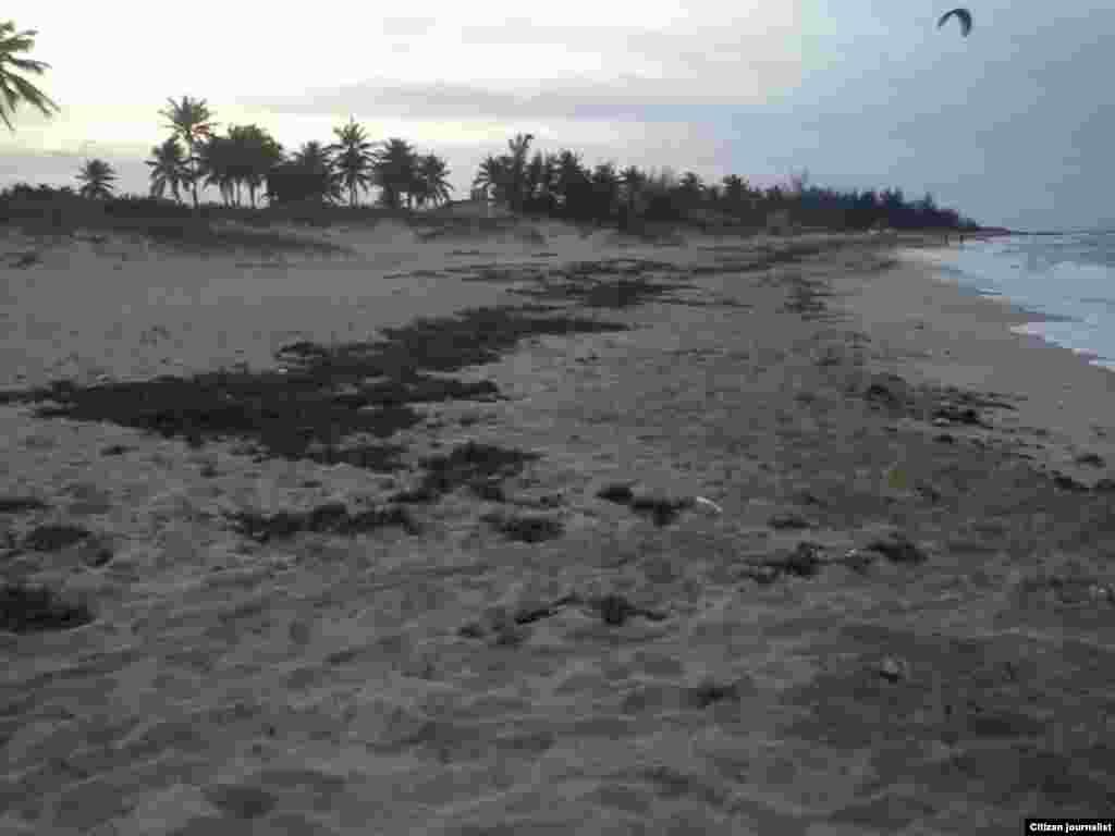 Reporta Cuba playas Habana Foto Miladis Carnel