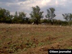 Reporta Cuba. El terreno marcado por las familias para hacer sus casas. Foto: Ricardo Sánchez.