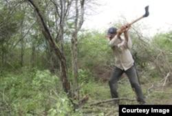 Cortando marabú en Cuba