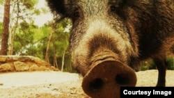 """""""De la podredumbre misma sale la luz: el cerdo corrompido echa llamas azules"""". José Martí"""