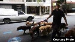 Opiniones sobre el servicio del cuidado animal en Cuba