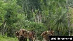 Reporta Cuba. Campesinos Baracoa.