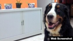 Aparece perro convertido en tendencia que viajaba en aerolíneas cubanas