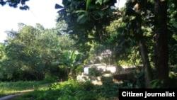 Bosques Reporta Cuba Foto Misael Aguilar
