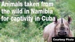 La Internacional Defensora de los Animales encabezó una campaña contra el envío de animales namibios a Cuba.