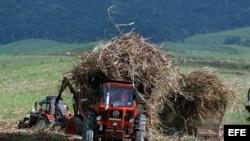Un campesino trabaja en un campo de caña de azucar.