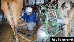 10 millones de litros de leche menos para la población cubana