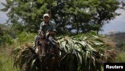 Un campesino cubano