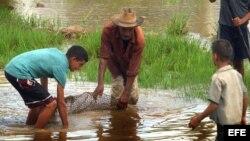 Niños ayudan a un campesino en campos sembrados de arroz en la provincia de Pinar del Río, en Cuba.