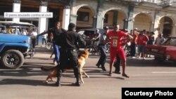 La policía reprime con perros una pelea en La Habana. Foto de Juliet Michelena para Cubanet.