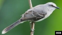 Entrevista a los pájaros