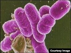 La bacteria se propaga fácil por alimentos y aguas contaminados.