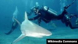 Un buceador bajo el agua junto a un tiburón de arrecife.