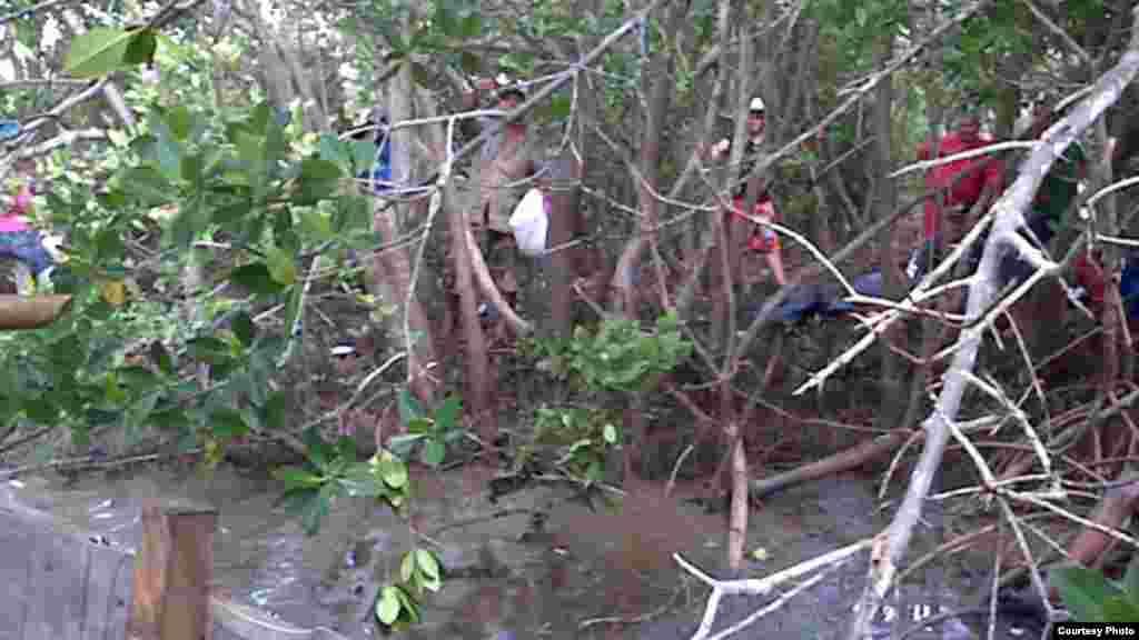 Manglar. zona cercana a Manzanillo de donde partieron los balseros.