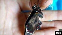 Las mariposas de Holguín