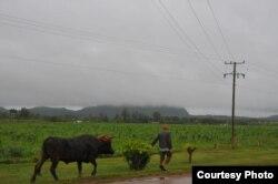 Carretera cerca de Ceiba Mocha.
