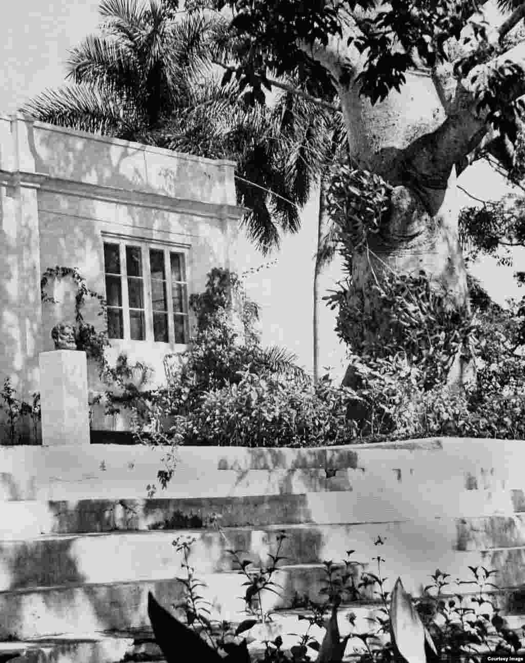 Ceiba de la Finca Vigía, foto de 1960.