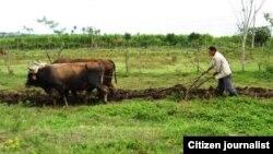 Campesino trabaja la tierra en La Habana. Foto Lázaro Yuri Valle.
