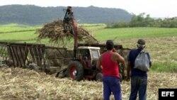 Dos campesinos observan como una cortadora-alzadora, hace su faena.