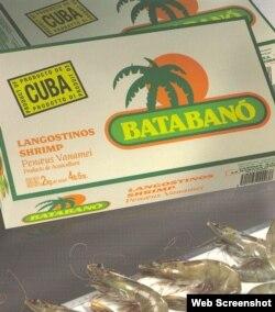 Langostinos de Cuba para exportación