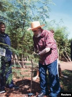 Fidel Castro en labores agrícolas con la moringa.