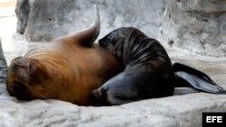 Leones marinos
