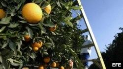 Agricultura con métodos de innovación.