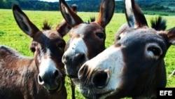 """""""Mal ayuda a un país el que lo presenta como una selva enmarañada, donde las mulas no tienen donde poner el pie"""". José Martí"""