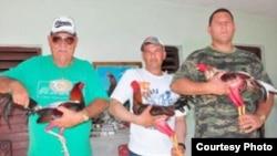 Ahora los galleros pueden ser exitosos y socialmente aceptados en Cuba.