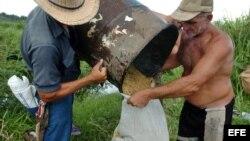 Más del 65% de superficie cultivable en Cuba presenta daños