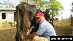 Campesino cubano ordeñando una vaca