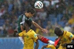 El delantero mexicano Javier Hernández (i) cabecea el balón ante los jugadores de Camerún durante el partido México-Camerún, del Grupo A del Mundial de Fútbol de Brasil 2014, en el Estadio das Dunas de Natal, Brasil.