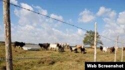 Reporta Cuba sequía
