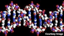 El grupo étnico africano Yoruba dejó la mayor huella genética en América.