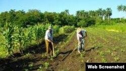 Reporta Cuba. Campesinos cubanos.
