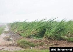 Campos de caña de azúcar dañados por el huracán Irma en Cuba