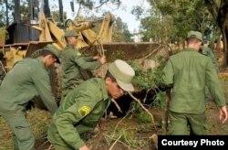 Brigadas de reclutas trabajan en la recogida de árboles. Foto CMHW.