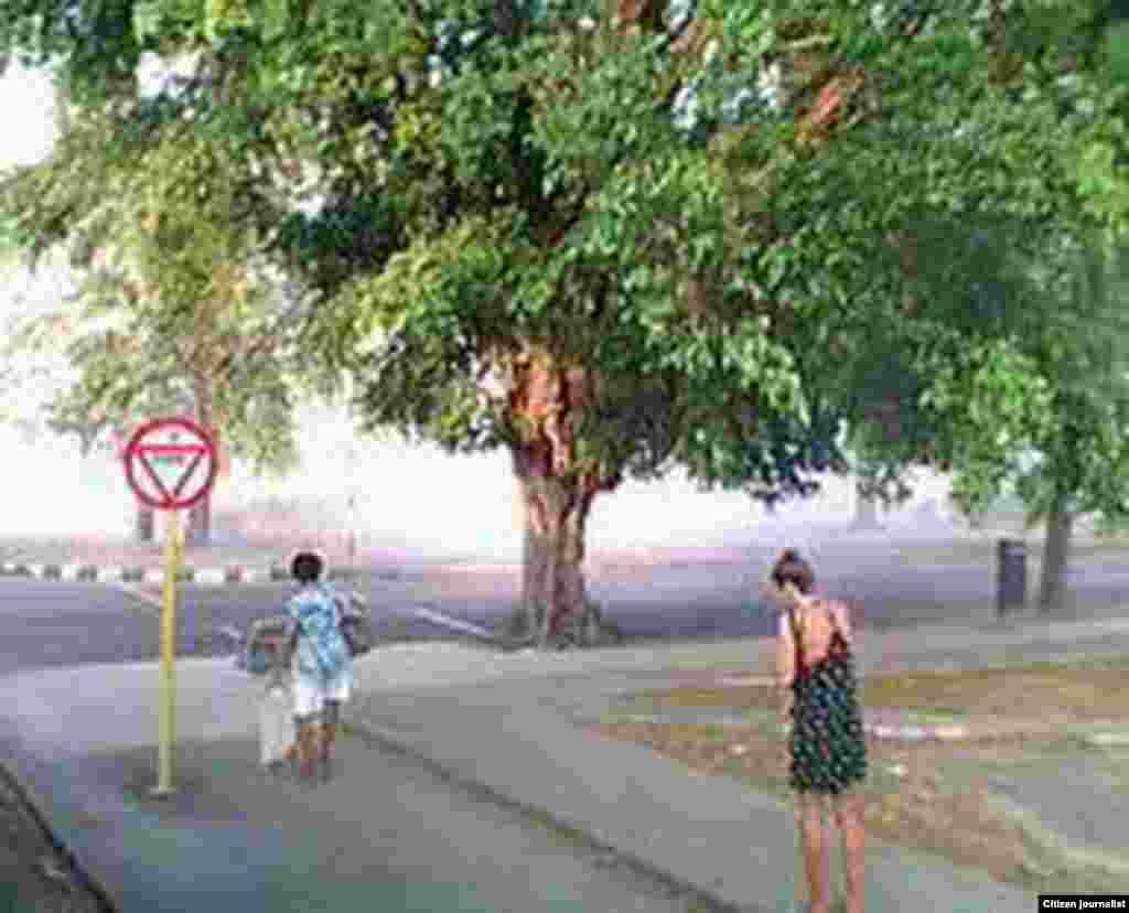Reportero ciudadano Rodrigo A. Rodríguez de la Red Cubana de Comunicadores muestra los efectos que produce la fumigación en la capital.