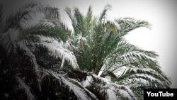 El cubano, las palmas y la nieve