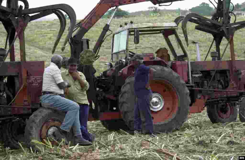 Campesinos conversan en un campo de caña de azúcar, junto a una cortadora-alzadora.