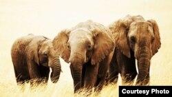 """Apodaron """"el cementerio de los elefantes"""" a una zona del sur de Miami Beach (OGE)."""
