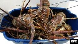 Se ha prohibido consumir o sacar del municipio todo tipo de pescados y mariscos.