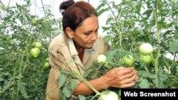 Al habla mujeres campesinas del Oriente de Cuba