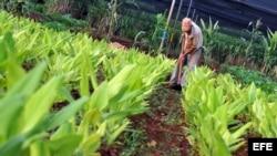 Se disparan los precios de los productos agrícolas en Cuba
