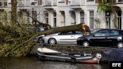 Un árbol arrancado de raíz cae encima de un coche en el canal Ryusdaelkade en Ámsterdam, Holanda, el 28 de octubre de 2013. Según los medios, una mujer ha resultado muerta del accidente. Hasta el momento se han registrado tres muertes a causa de la caída