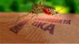 Los cubanos parecen confiados después de convivir por años con el mosquito transmisor, Aedes Aegypti.