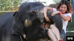 La turista y el elefante.