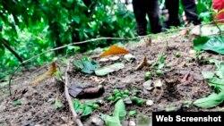 Plantaciones de café dañadas